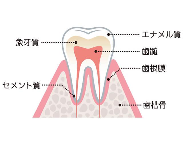 大切な歯を抜かずに・・・根管治療の大切さ